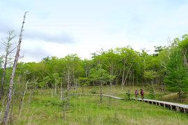 奥日光の隠れた名瀑と木漏れ日に癒される「戦場ヶ原」ハイキング