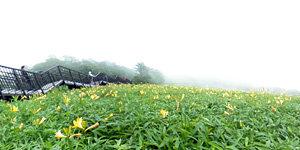 霧降高原キスゲ平園地 1,000段付近
