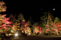 星野家の日本庭園ライトアップ