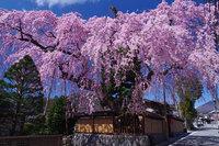 日光の桜のシーズンは4月上旬からです