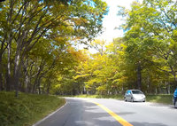 奥日光 国道120号戦場ヶ原付近の車載動画をアップしました。