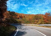 紅葉が見頃になったいろは坂の車載動画をアップしました。