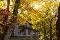 奥日光 中禅寺湖畔の紅葉は今が見頃です!