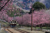 春の花祭りフリープラン