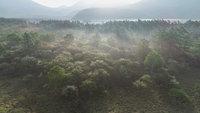 戦場ヶ原と光徳沼の空撮動画をアップしました。
