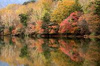 竜頭ノ滝・湯ノ湖・湯滝が紅葉見頃を迎えています。