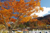 奥日光 中禅寺湖畔の紅葉は今が見頃です!お早めにどうぞ。