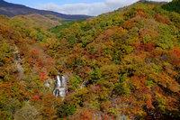 霧降の滝で美しい紅葉が見頃を迎えております!