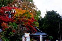 世界遺産日光の社寺の紅葉が見頃になりました!