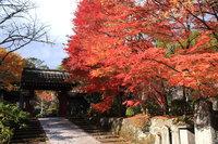 世界遺産 日光の社寺周辺にて紅葉が見ごろを迎えております。